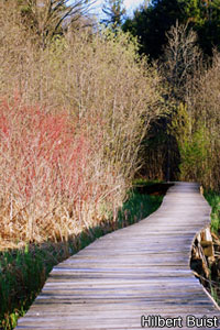 Boardwalk Through Nature