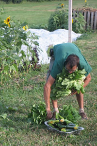 Gardener in a local community garden