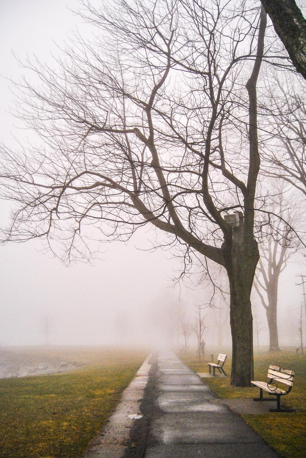 18546230_1498764694009_Foggy Walk -